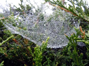Jewelled Hammocks? Just spiders' webs filled with raindrops.