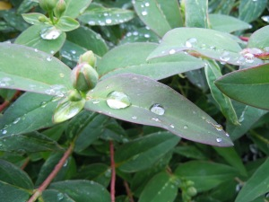 The Beauty of a Raindrop on Leaves